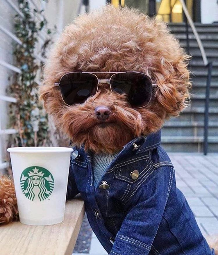 Cutest Dog Breeds in the world Follow me for more cool pics and information about puppies and dogs cutest dog puppy
