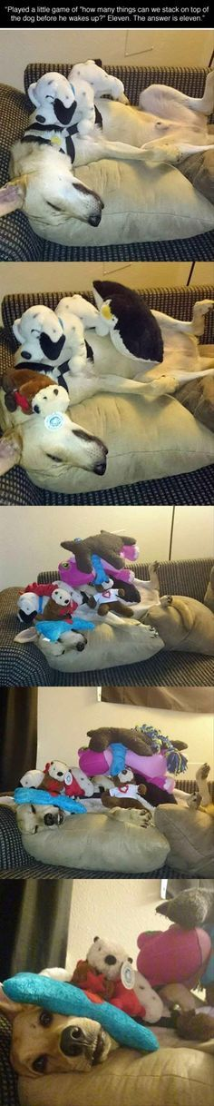 Funny Animal The Day – 9 Pics