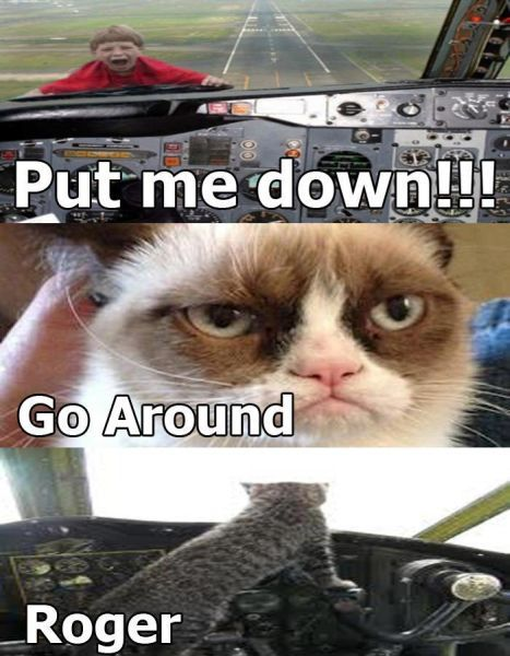 Grumpy Cat Pilot Funny pictures