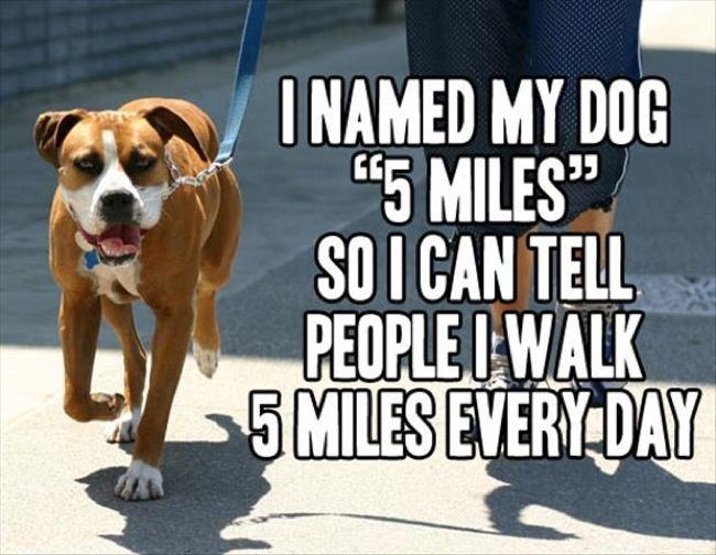 See the Elegant Funny Prairie Dog Memes