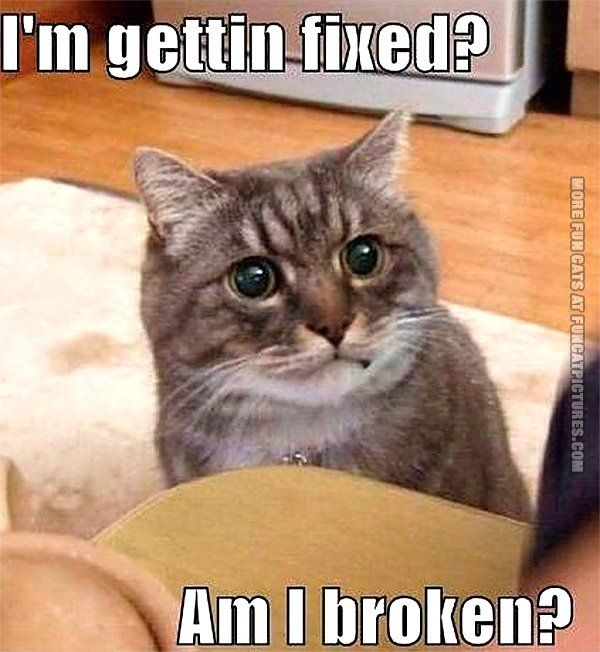 funny cat pic im ting fixed
