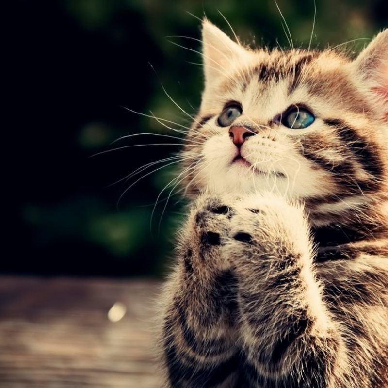 10 Top Cute Cat Wallpapers Hd FULL HD 1920—1080 For PC Background 2018 free