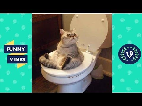 Funny Cats pilation 2016 – Best Funny Cat