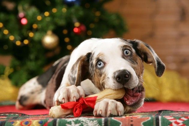55 of Funny Animals Cutely Enjoying Christmas