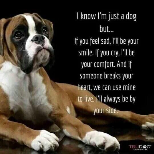 BoxerMom BoxerDogLife ILoveMyBoxers Boxer Dog Quotes Dog Breeds Boxers Boxer