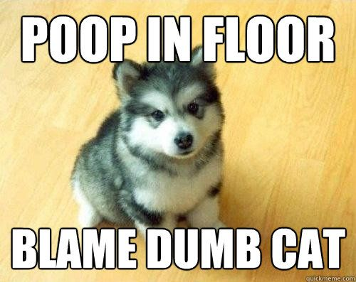 Poop in floor blame dumb cat