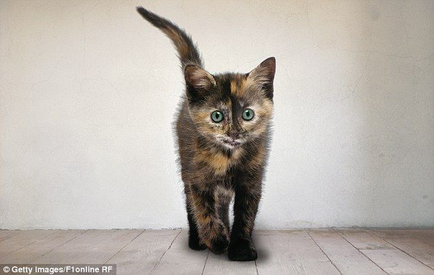 Cat owners learn to develop a shared language with their pets they can discern the