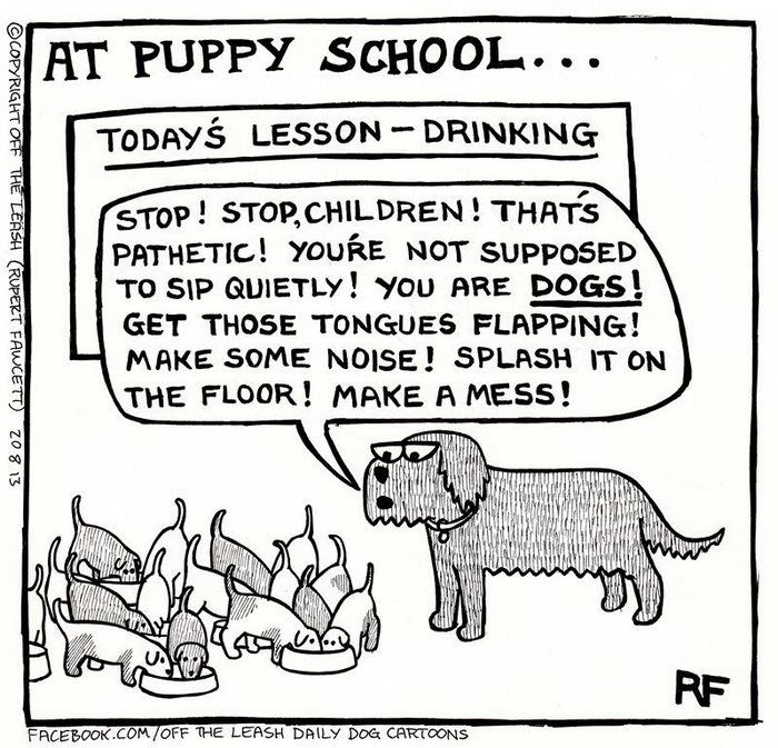 Funny Dog Cartoons