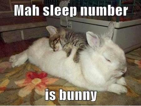 Rabbit Ramblings Funny Bunny Memes