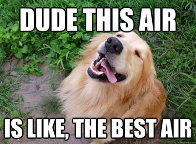 stoner dogs meme 10 dog meme funny dog memes dog memes