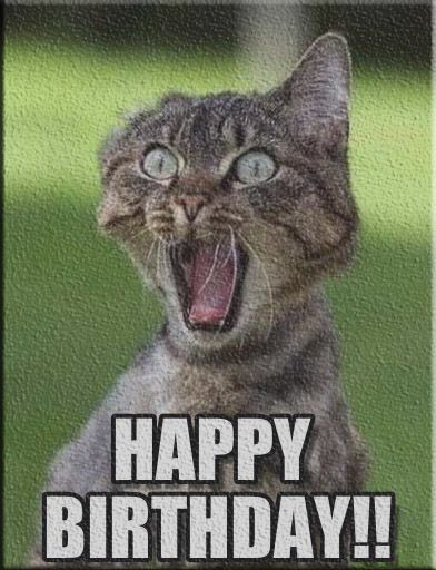 See the Fascinating Happy Birthday Cat Funny Memes