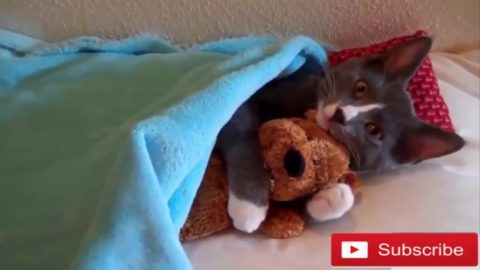CAT VIDEOS FUNNY 2018 TOP CUTE CAT VIDEOS FUNNY IN THE WORD