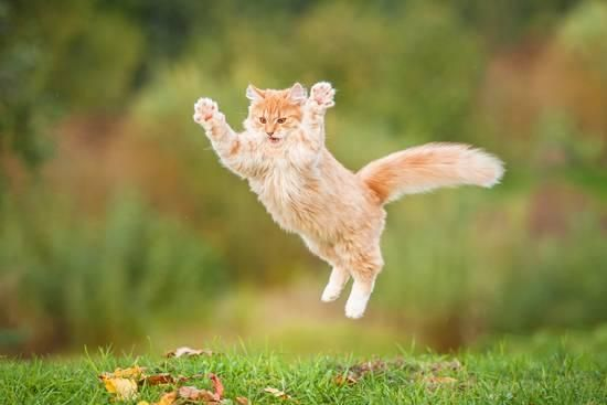 Funny Red Cat Flying in the Air in Autumn graphic Print by Grigorita Ko at AllPosters