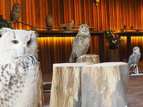 Happy Owl Cafe Chouette Chuo 2019 All You Need to Know BEFORE You Go with s TripAdvisor