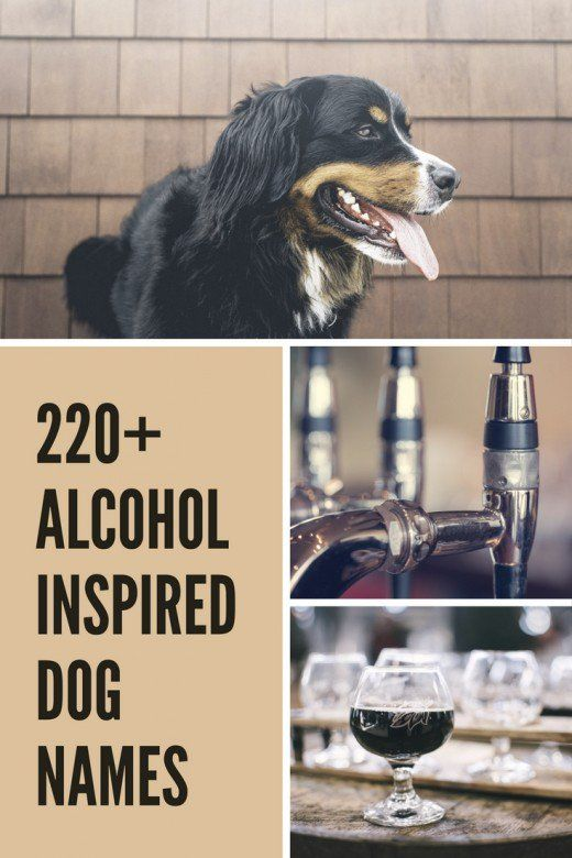 220 Fun Alcohol Inspired Dog Names