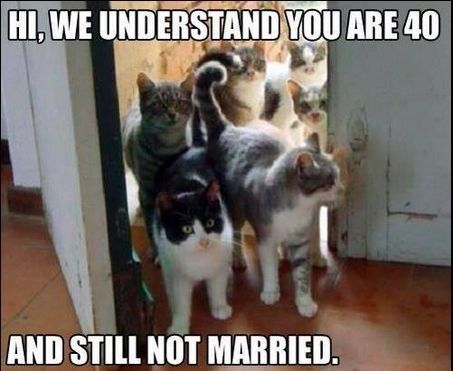 crazy cat lady meme with pic of cats entering house of an aging bachelor