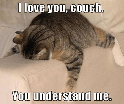 hilarious cat memes