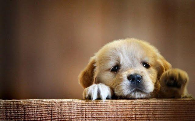 Cute Puppy Wallpaper HD Pics Download Free New HD Wallpapers