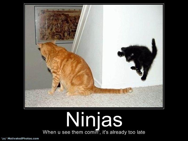 Funny Ninjas Cat Picture