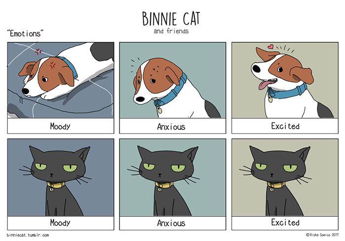 Funny Cats Vs Dogs ics