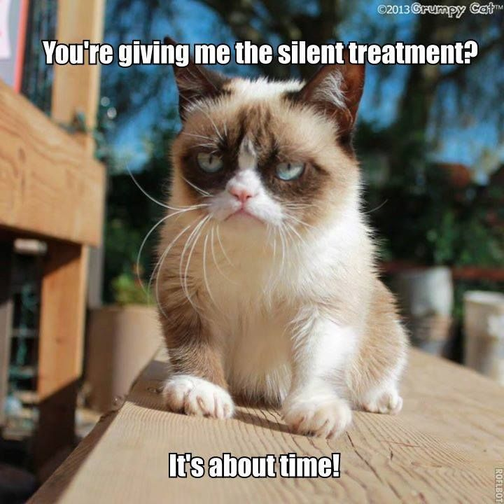 Funny memes Pin by Terry Campbell on grumpy Pinterest from cat
