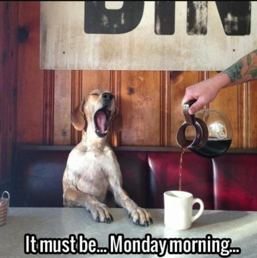 See the Incredible Funny Dog Good Morning Memes