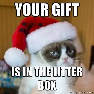 grumpy cat christmas meme 004 in the litter