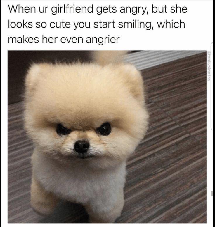 42 Hilarious Animal Memes