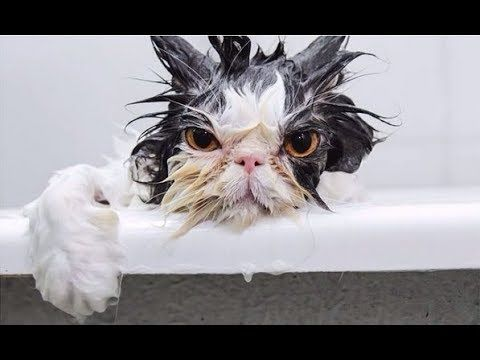 Funny Cats vs Water pilation