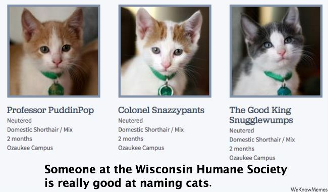 funny cat names weknowmemes