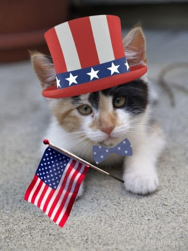 Cats And Dogs Who Love America