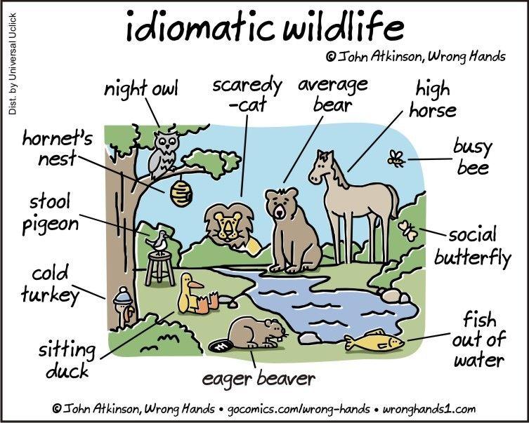 Source wronghands1 english language idioms sayings wordplay animals wildlife cartoons ics funny images funny animals funny pics