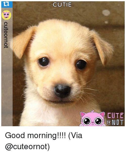 Funny Dog Cutie 10h Cute 0d Cuteornot Good Morning Viacute Animal Memes Meme