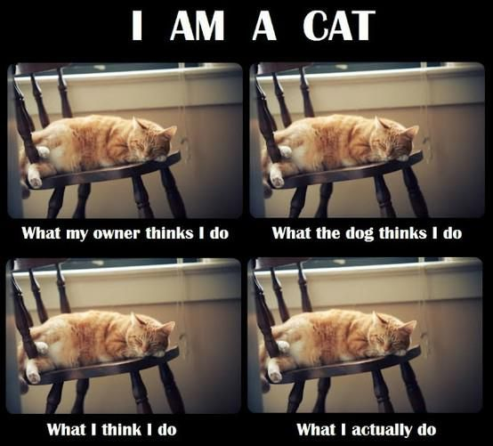 Posts Details Tags cat jokes funny cats funny pictures I am a cat Categories Funny pictures