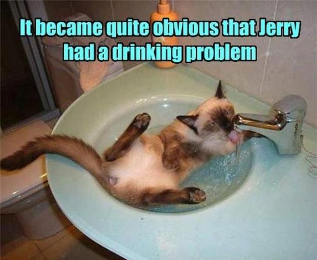 Best Funny Cat Pic