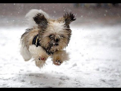 """""""Dogs Playing in Snow pilation"""" CFS"""