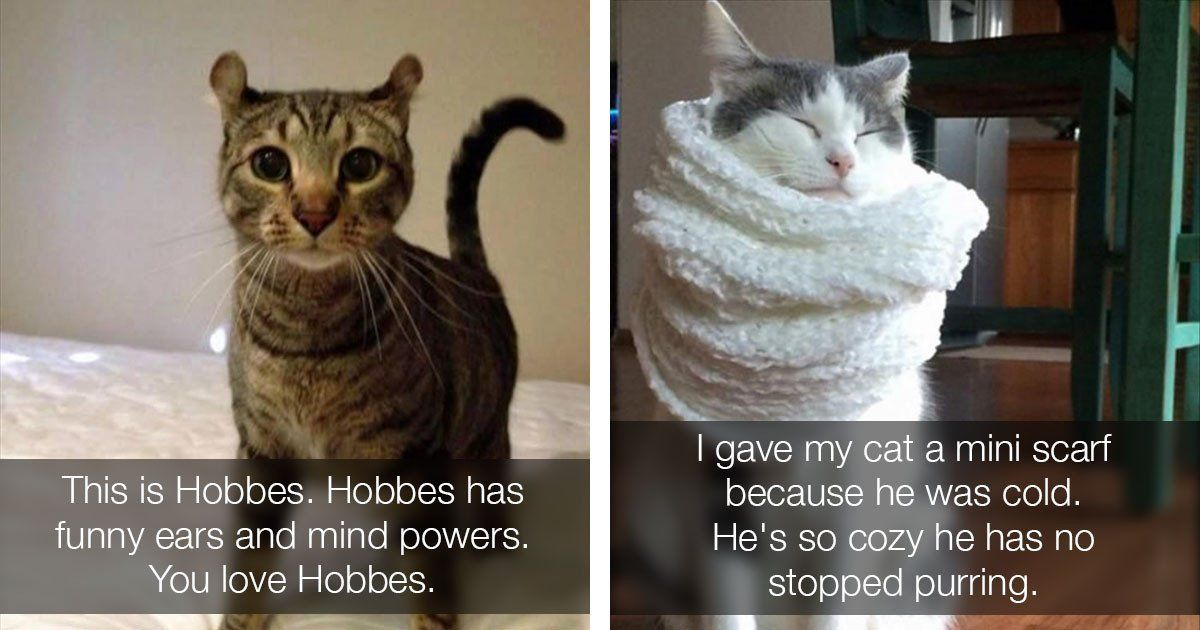 The Funniest Cat Memes The Internet Today For You Right Meow