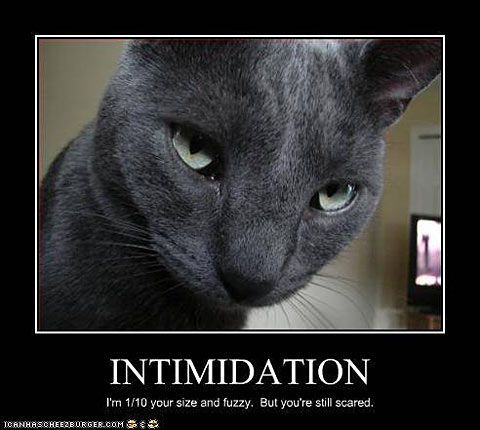 Best Funny Black Cat Memes 22 Funny Cat Motivational Posters Find the Funniest Cat