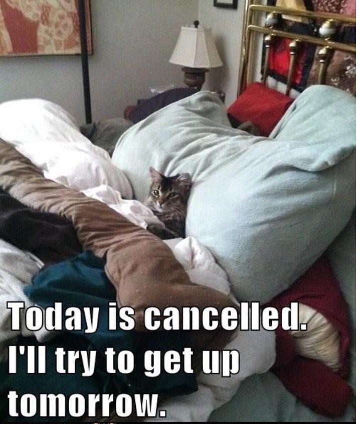 Out sick Cute Cat Gif Cat