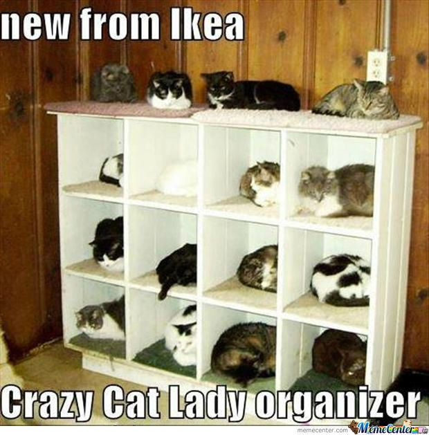 Crazy Cat Lady Set Up Kit