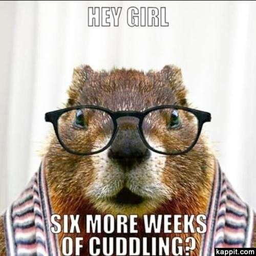 See the Lovely Funny Groundhog Memes with Grumpy Cat
