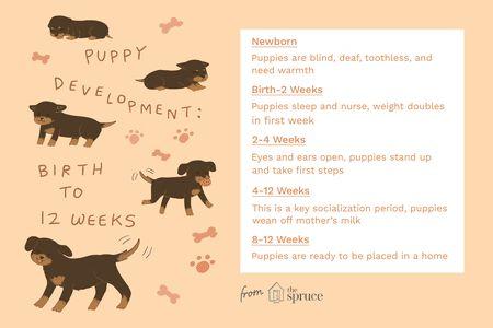 puppy development part 1 FINAL 5b1e7a0b1d a7cc