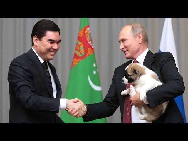 A puppy for Putin – but for dogs in Turkmenistan it s open slaughter Cities