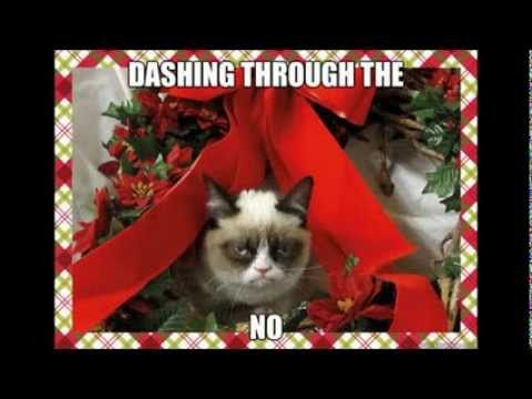 See the Lovely Funny Xmas Cat Pictures