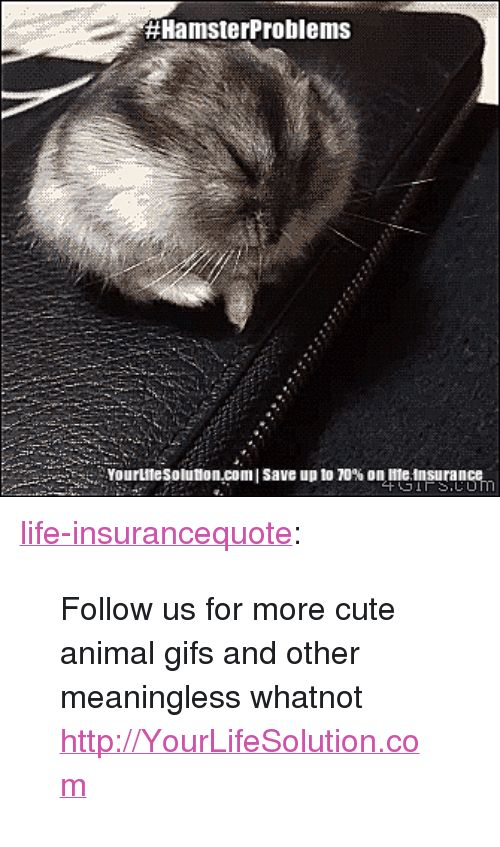 Cute Life and Tumblr HamsterProblems Yourtnesolution I saveupto