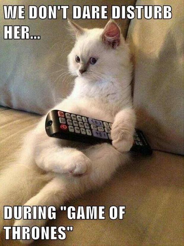 Game of thrones joke Cat memes kitty cat humor funny joke gato chat captions feline laugh photo