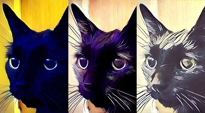 cbd oil feline dimentia cats pets