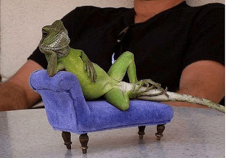 chameleon 58b8aa405f9b58af5c51fd1b