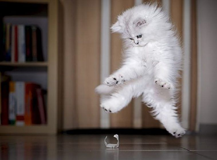 Scared Cats The Best Funny Cats Jumping Videos pilation a