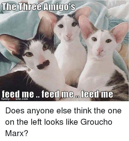 Doe Memes and Groucho Marx The Three Amigo s feed me feed ine OD